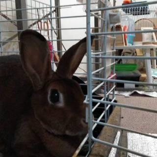飼い主が亡くなったウサギの新しい家族を探してます