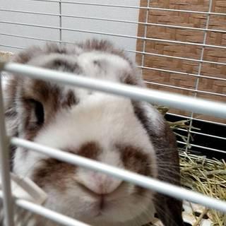 飼い主が亡くなったウサギの新しい家族を探しています
