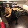 仲良し猫兄弟の里親募集