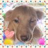 非営利一般社団法人動物愛護団体『愛の肉球会』