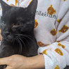 Z24 黒猫くん