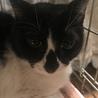 猫さん大好き!美人猫こりんちゃん☆2歳 サムネイル2