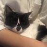 猫さん大好き!美人猫こりんちゃん☆2歳 サムネイル3