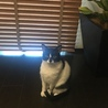 猫さん大好き!美人猫こりんちゃん☆2歳 サムネイル4