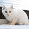 生後2ヶ月の真っ白な女の子、クリスティ サムネイル3