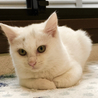 生後2ヶ月の真っ白な女の子、クリスティ サムネイル5