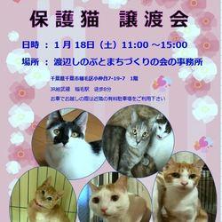 稲ねこ 保護猫譲渡会
