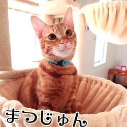 ※※中止です※※→セキチュー川越南古谷店☆犬猫譲渡会 サムネイル1