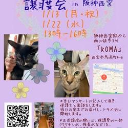 もふもふ西宮 保護ネコの幸せ譲渡会♡ サムネイル1