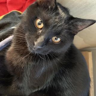 黒猫 ☆ 男の子 ☆ しっぽ長い、去勢済、3兄弟