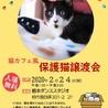 2/24(祝)猫カフェ風保護猫譲渡会
