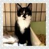 ソックスをはいた白黒猫のはなちゃん♡ サムネイル2