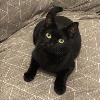 1歳ちょうどの黒猫の女の子
