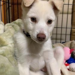 譲渡犬(R1/9下旬生まれ)の噛みぐせ