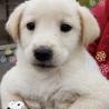 個体番号:M839 可愛い仔犬