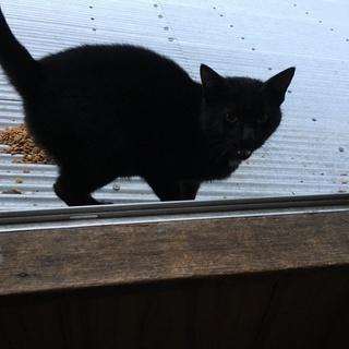 黒子猫(オス・7か月)の里親を募集します!!