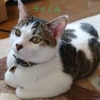 加藤雷電(らいでん)