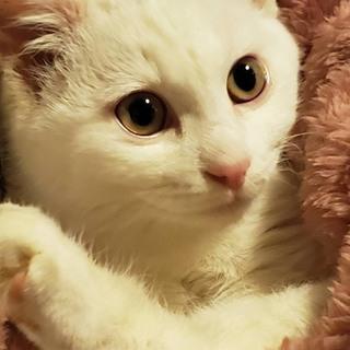 可愛い子猫  白血病キャリアだけど幸せになりたい