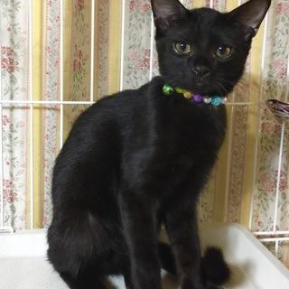イケメン黒猫です♪