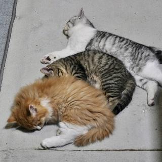 元気な保護猫3兄弟☺︎☺︎☺︎