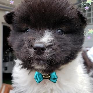 個体番号:M833 可愛い仔犬です。