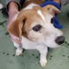 飼い主死亡で遺族によりセンター持ち込された犬 サムネイル5