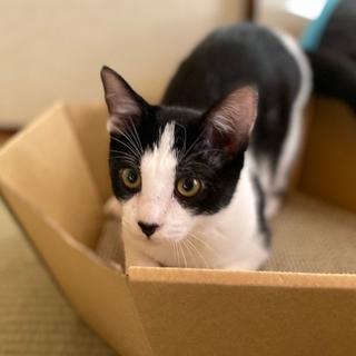 7月生まれの子猫 白黒兄妹 オセロ♂