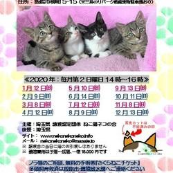 ねこ譲渡会(武田ミシン2階) サムネイル2