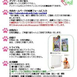 ねこ譲渡会(武田ミシン2階) サムネイル3