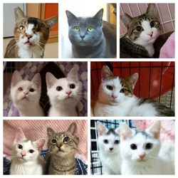 川越市保健所(保護犬・保護ネコの譲渡会)