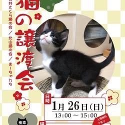 保護猫の譲渡会at北山集会所