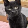 黒猫リーチ
