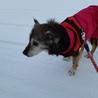 【小雪】まだまだ元気。穏やかなおばあちゃん犬。 サムネイル6