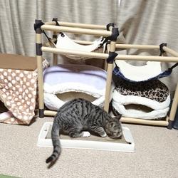 姫&殿、猫用品が2つに(おいちゃんの心配 2)