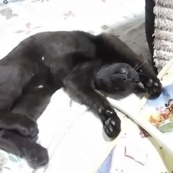 黒猫男子の寝相