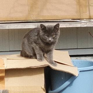 黒猫・グレー猫⭐3ヶ月