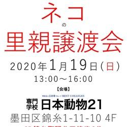 1月19日(日) 錦糸町でネコの里親譲渡会です!