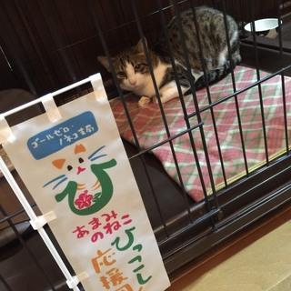 奄美大島からやって来た三太郎くん
