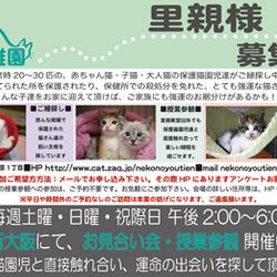 ■新大阪■合同お見合い会■子猫も多数参加!■お見合い会&ふれあい授業参観■