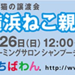 1/26(日)ちばわん横浜ねこ親会