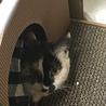 ゴロゴロで甘えんぼうの保護猫ちゃん!