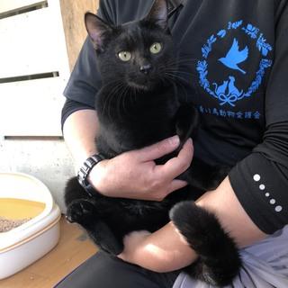 可愛い黒猫ジープくん