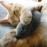 お転婆の抱き枕・・・