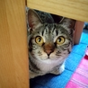 怖がりだけど飼い主にはデレデレな猫ちゃん♬︎♡