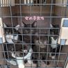 子猫6匹(女の子5匹&男の子1匹)