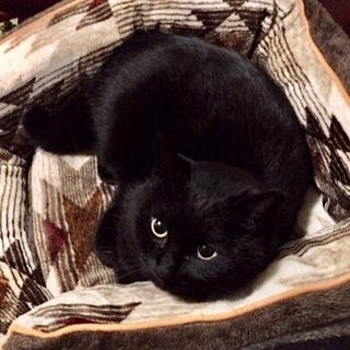 お目々ぱっちり黒猫ちゃん