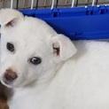 雑種の子犬、玉子ちゃん♀推定2ヶ月