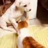 雑種の子犬、玉子ちゃん♀推定2ヶ月 サムネイル2