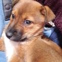 雑種の子犬、まこちゃん♀推定5ヶ月