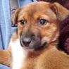 雑種の子犬、まこちゃん♀推定2ヶ月 サムネイル2